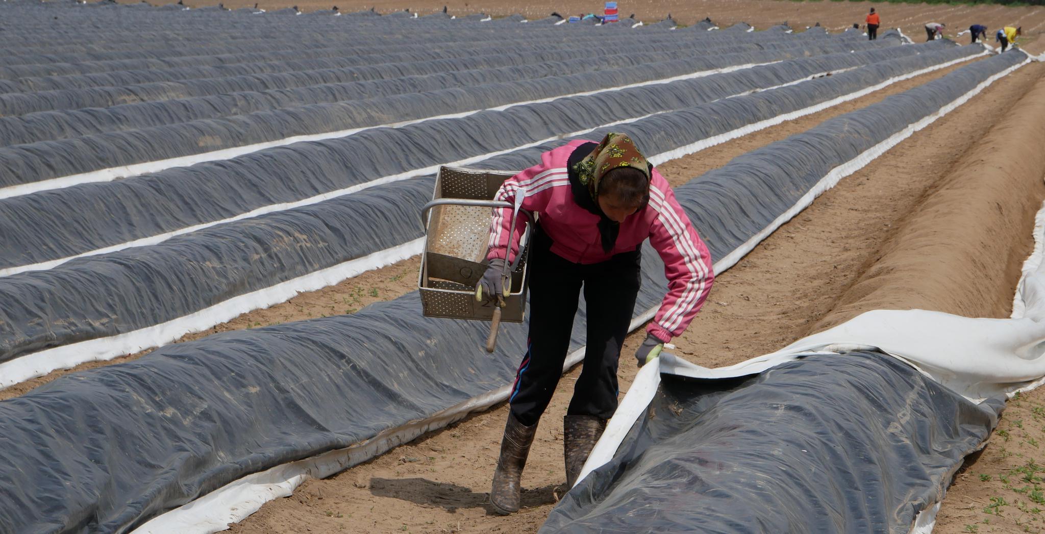 Saisonarbeit in der Landwirtschaft